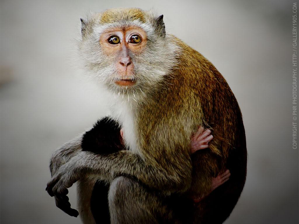 Jadi Korban Monyet Ngenesgilak